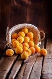 Abricots dans le panier Image libre de droits