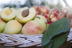 Abricots et cerises dans le panier image stock
