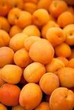 Abricots frais Photographie stock libre de droits