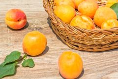 Abricots mûrs dans un panier et sur une table en bois images stock