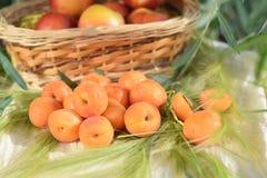 abricots mûrs Image libre de droits