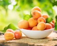 Abricots mûrs au-dessus de fond vert de nature photographie stock