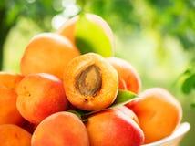 Abricots mûrs au-dessus de fond vert de nature images stock