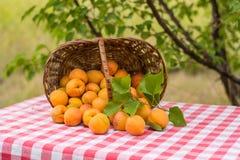 Abricots mûrs, délicieux et parfumés en gros plan dans un panier de rotin sur une table Images libres de droits