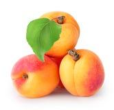 Abricots mûrs jaunes avec la feuille photos libres de droits