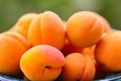 Abricots organiques frais dans le vase vert images stock