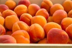 Abricots organiques frais sur le marché français Image libre de droits