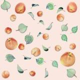 Abricots, pêches et feuilles Photos libres de droits