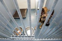 Abrigo animal Fotografía de archivo
