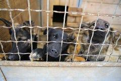 Abrigo animal Casa do embarque para cães Imagem de Stock
