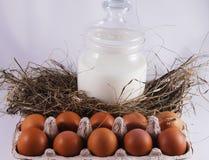 Abrigo con los huevos frescos Fotos de archivo libres de regalías
