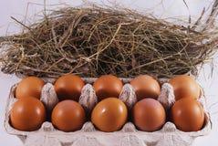 Abrigo con los huevos frescos Imagenes de archivo