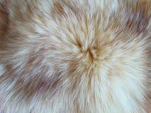 Abrigo de pieles del escribano Fotografía de archivo