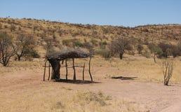 Abrigo de ramos de árvore no sol africano Foto de Stock