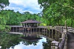 Abrigo do arboreto dos manguezais, Sungei Buloh Singapore Foto de Stock