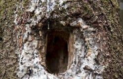 Abrigo do pássaro na árvore foto de stock royalty free