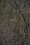 Abrigo inoperante e ramos retorcidos com videiras inoperantes fotografia de stock royalty free