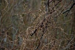 Abrigo inoperante e ramos retorcidos com videiras inoperantes imagem de stock royalty free
