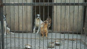 Abrigo para cães dispersos vídeos de arquivo