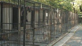 Abrigo para cães dispersos filme
