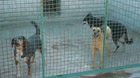 Abrigo para cães dispersos video estoque