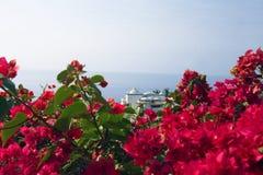 Abrigue com primeiro plano das flores Foto de Stock Royalty Free