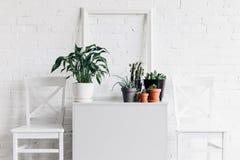 Abrigue a decoração com os houseplants na frente da parede de tijolo branca Fotografia de Stock Royalty Free