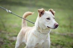 Abrigue el perro Fotografía de archivo libre de regalías