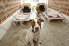 Abrigue el perro Fotos de archivo