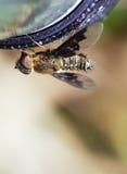 Abrigue a mosca imagens de stock royalty free
