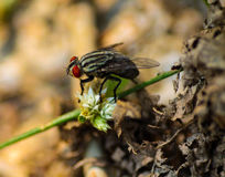 Abrigue a mosca Fotografia de Stock