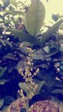 Abrigue a mosca Fotos de Stock Royalty Free