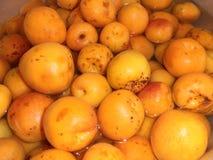 abrikoos Royalty-vrije Stock Foto
