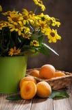 abrikoos Stock Foto's
