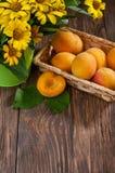 abrikoos Stock Fotografie