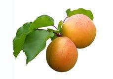 Abrikosa isolato di frutti Fotografia Stock
