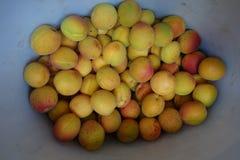 Abrikozen in de witte emmer stock afbeelding