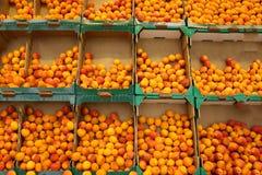 Abrikozen op de markt stock afbeelding
