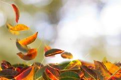 Abrikozenbladeren het vallen stock afbeelding