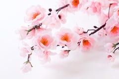 Abrikozenbloemen Stock Afbeeldingen