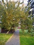 Abrikozenboom royalty-vrije stock foto's