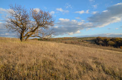 Abrikozenboom in de herfst op een gebied op een heuvel op een achtergrond van de toneelhemel Royalty-vrije Stock Fotografie