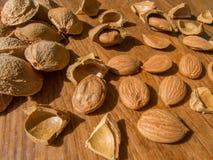 Abrikozenzaad en gebarsten abrikozenzaden Stock Fotografie