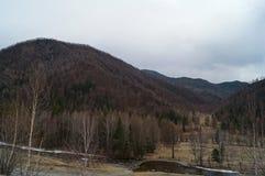 abril em Altai  Imagem de Stock Royalty Free