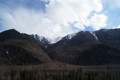 abril em Altai  Foto de Stock Royalty Free