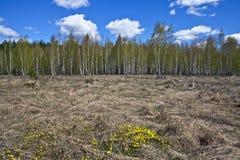 Abril en el bosque Foto de archivo libre de regalías