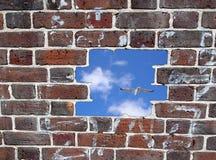 Abrindo em uma parede de tijolo, em um céu azul e em uma gaivota Fotos de Stock