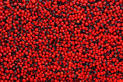 Abrus precatorius. American Pea, Prayer Beads, Rosary. Pea, Crab is Eye Vine, Abrus precatorius , Jequirity seeds ,background and texture,Used as beads and in Royalty Free Stock Images