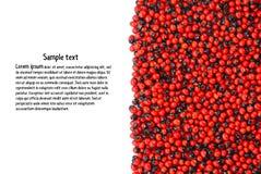 Abrus precatorius. American Pea, Prayer Beads, Rosary. Pea, Crab is Eye Vine, Abrus precatorius , Jequirity seeds , White space to jot down something.,Used as Stock Photo