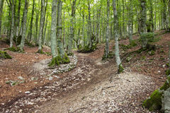 Abruzzo beech forest Royalty Free Stock Photo